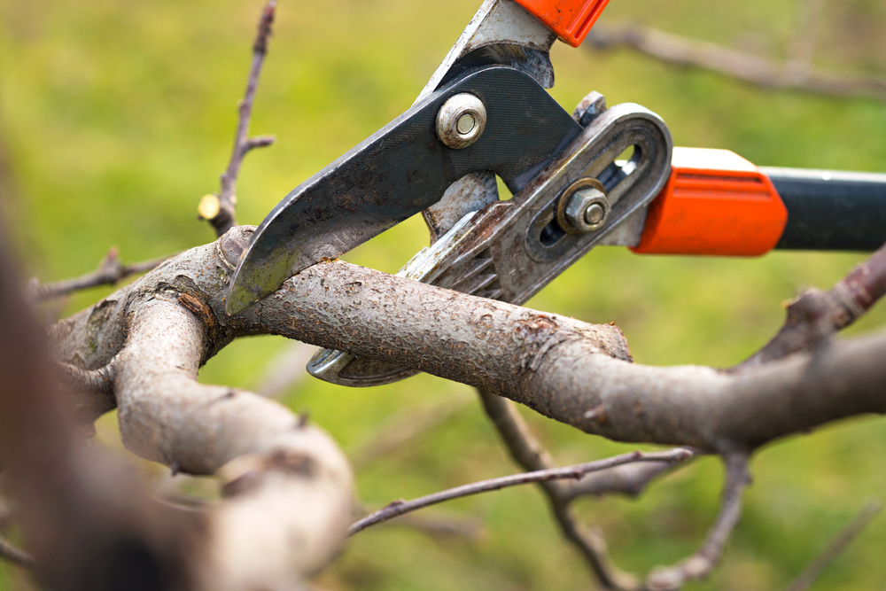 Tree Pruning Pembroke FL